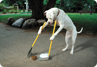 dog-poop-scoop