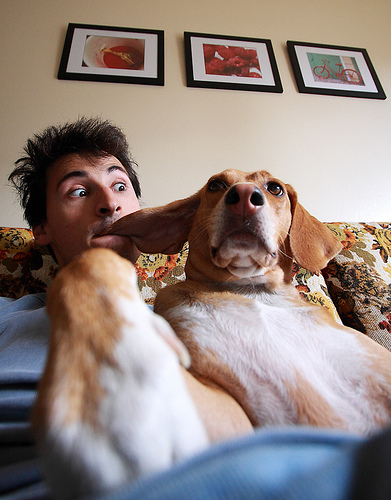 Why you should let dog owners get cozy: they'll make you money. Photo by http://www.flickr.com/photos/tudor.