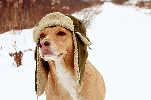 Dogs love winter. Don't you? Photo from http://www.flickr.com/photos/tudor/