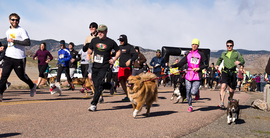 Boulder Cainine Walk and Run