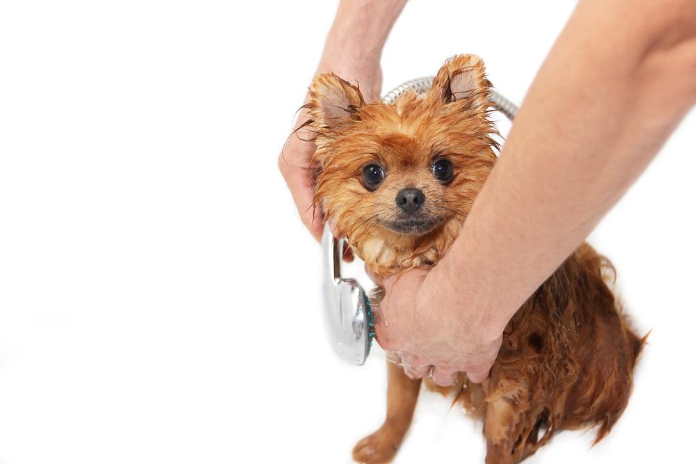 blog dog 2