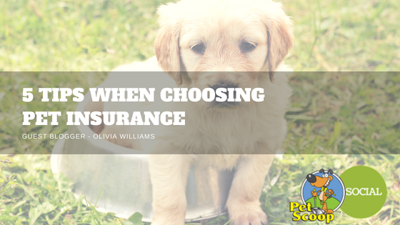Pet Scoop - 5 tips when choosing pet insurance in Denver