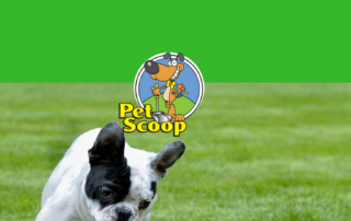 Why Use Pet Scoop Year Round rev
