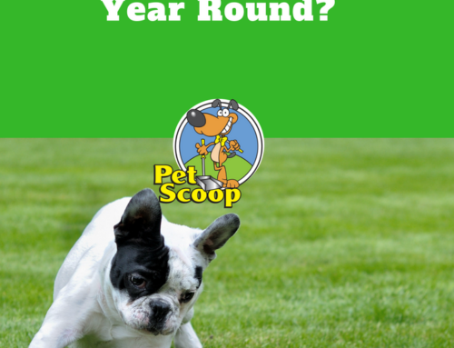 Why Our Clients Use Pet Scoop Year Round