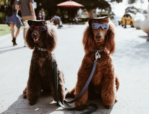 The Best Places to Eat, Drink and Be Merry With Your Dog in Denver