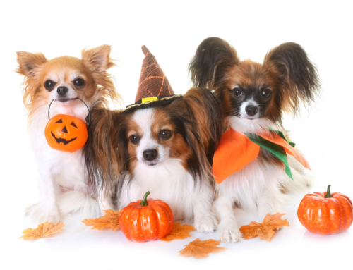 8 Essential Tips for Dog Safety on Halloween
